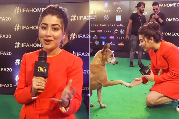 Heart-melting video: Stray dog interviewed at IIFA 2019 after stealing Salman's Limelight