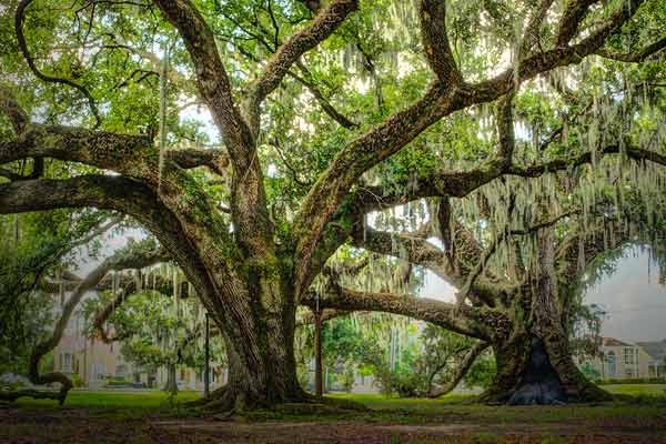 SC order  Find out how much oxygen a tree releases in its lifetime