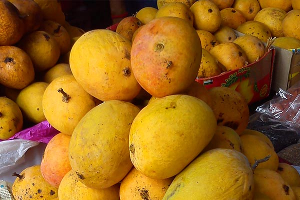 Countries like Russia, Australia and China love  Indian mangoes