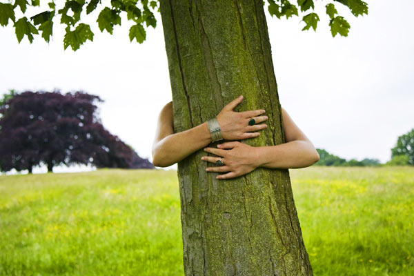 Icelandic Forestry Service asks people to hug trees to feel relaxed amid coronavirus outbreak